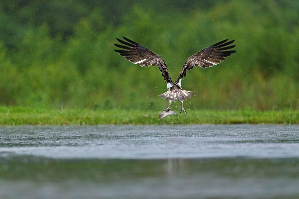 foto sguardi sulla natura