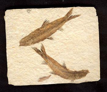 fossili (1)