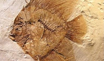 fossilibolca-cont