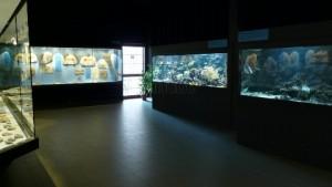museo-dei-fossili-di-bolca